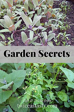 It's early May, and the growing season looks so promising. But fast-forward to late July, and your garden has exploded—or imploded. Read more about my secret to enjoying this personal jungle.