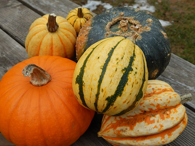 As a kid, my least favorite Thanksgiving staple was pumpkin pie. I had to discover savory squash dishes before I could enjoy it. Learn to make Creamy Pumpkin–Rum Pie and Roasted Squash Soup.